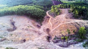 Licenciamentos Ambientais estudo de viabilidade ambiental
