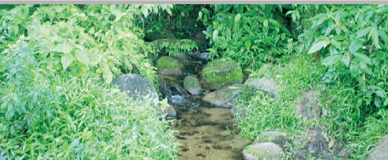 Licenciamentos Ambientais Diagnóstico Preliminar